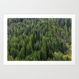Wall of Trees Art Print