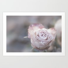 Frozen Pink Rose in Winter - Roses and Flowers Art Print