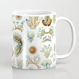 Ernst Haeckel - Scientific Illustration - Bryozoa Coffee Mug