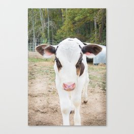 Hickory Nut Gap Farm - Brown Calf Canvas Print