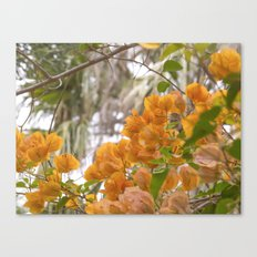 Touch of warmth Canvas Print