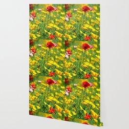WILD POPPIES Wallpaper