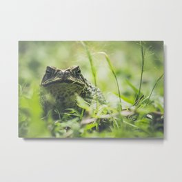Animal Photography - Big Toad Metal Print