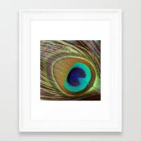 peacock feather Framed Art Prints featuring Peacock Feather by Kim Bajorek