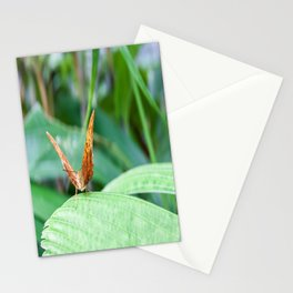 Cruiser Butterfly Stationery Cards