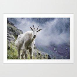 Mountain Goat Kunstdrucke