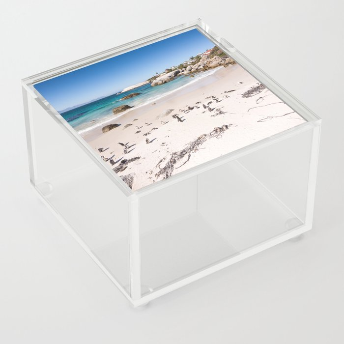 Penguins on Boulders Beach in Cape Town, South Africa Acrylic Box