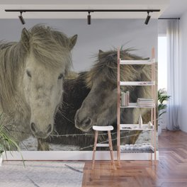 Native Icelandic Horse Portrait Wall Mural