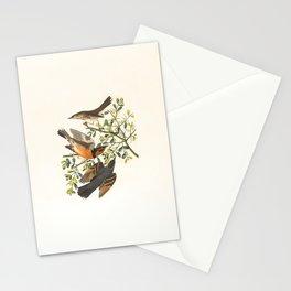 Mountain Mocking Bird, Orpheus montanus Stationery Cards