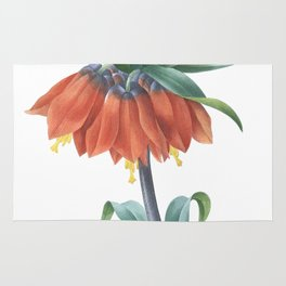 HIGHEST QUALITY botanical poster of Fritillaria Imperialis Rug