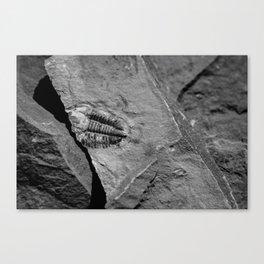 Utah - Trilobite Fossil Crack Canvas Print