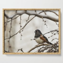 Spotted Towhee Serving Tray