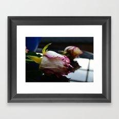 Dying Rose Framed Art Print