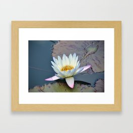 Water Lily in Pond Framed Art Print