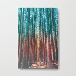 Sugar Pine, Australia Metal Print