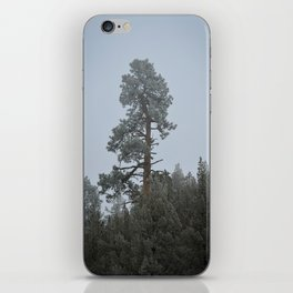 Ponderosa Pine In The Mist iPhone Skin