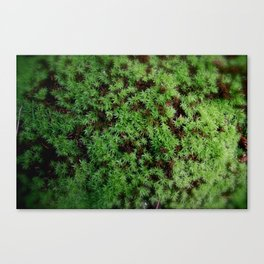 carpet Canvas Print