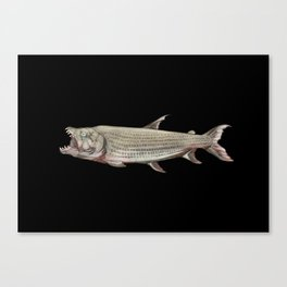 Icons of Africa - Goliath Tigerfish Canvas Print
