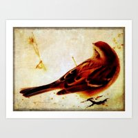 sparrow Art Prints featuring Sparrow by Christine Belanger