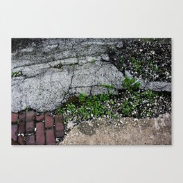 pavement art Canvas Print