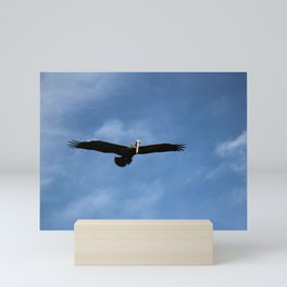 Pelican In The Afternoon Mini Art Print