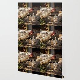 Mother Hen Wallpaper