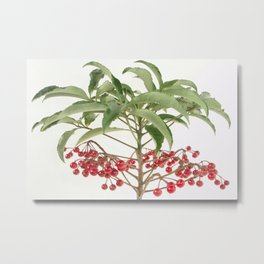 Spice Berry  Metal Print