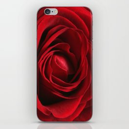 Close up of a Romantic Red Rose iPhone Skin