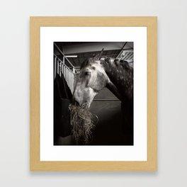 Horse Eating Hay Framed Art Print