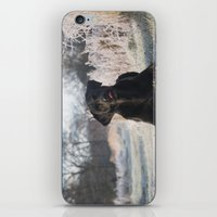 labrador iPhone & iPod Skins featuring Black Labrador    by Simon's Photography