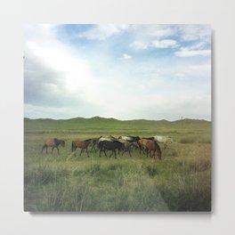 Wild Horses in Mongolia Metal Print