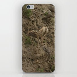 Baby Mountain Goat in Yellowstone National Park, WY iPhone Skin