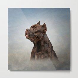 American Staffordshire Terrier 5 Metal Print