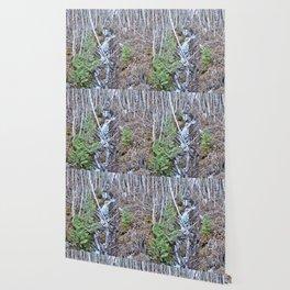Mountain Side Creek  Wallpaper