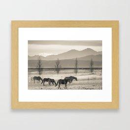 Wild Mountain Horses - Sepia Framed Art Print