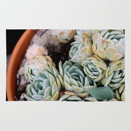 California Potted Succulents Rug