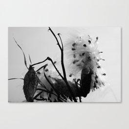 Asclepias syriaca Canvas Print