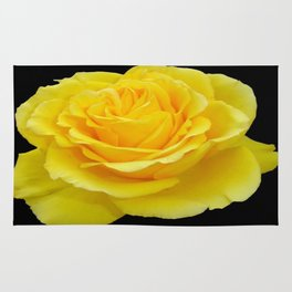 Beautiful Yellow Rose Flower on Black Background Rug