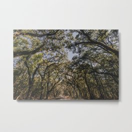 Wormsloe Live Oak Avenue - Savannah III Metal Print