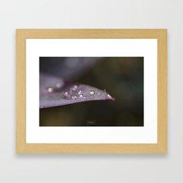 Pearl Framed Art Print