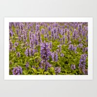 lavender Art Prints featuring lavender by Julio O. Herrmann