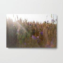 Wheat Dreams Metal Print