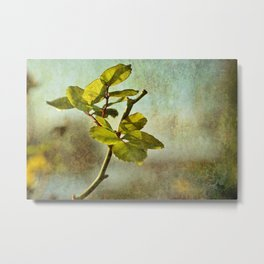 Textured Rose Leaf Metal Print