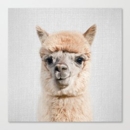 Alpaca - Colorful Canvas Print