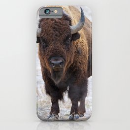 In The Presence Of Bison 2  iPhone Case