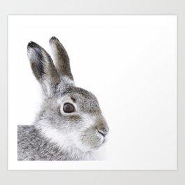 Curious hare Art Print