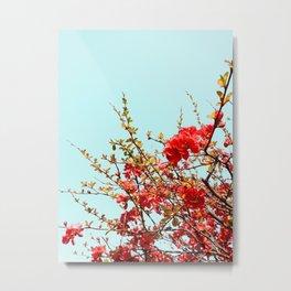 Japanese quince tree #2 Metal Print