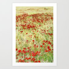 Windy poppies Art Print
