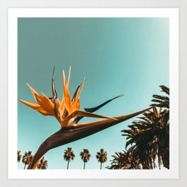 Birds of Paradise Print {1 of 3} | Palm Trees Ocean Summer Beach Teal Photography Art Art Print