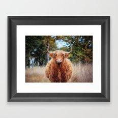 Scottisch Higlander Cow Framed Art Print